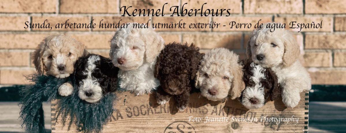 Kennel Aberlours